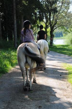 centre equestre marville les bois